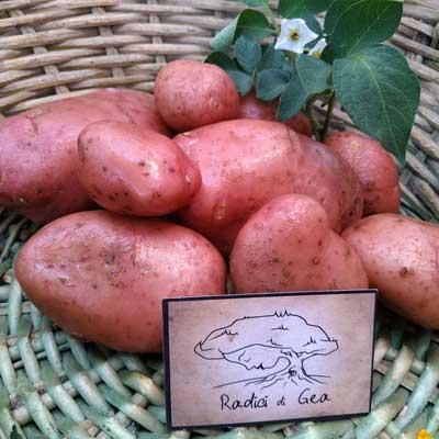 patate rosse Radici di Gea