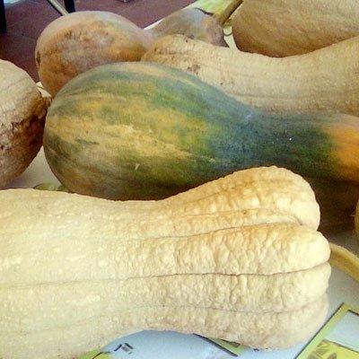 zucca lardaiole lunga 1 fetta di 1kg - pulmino contadino
